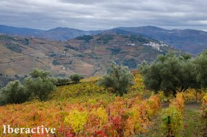 douro-valley-portugal-002