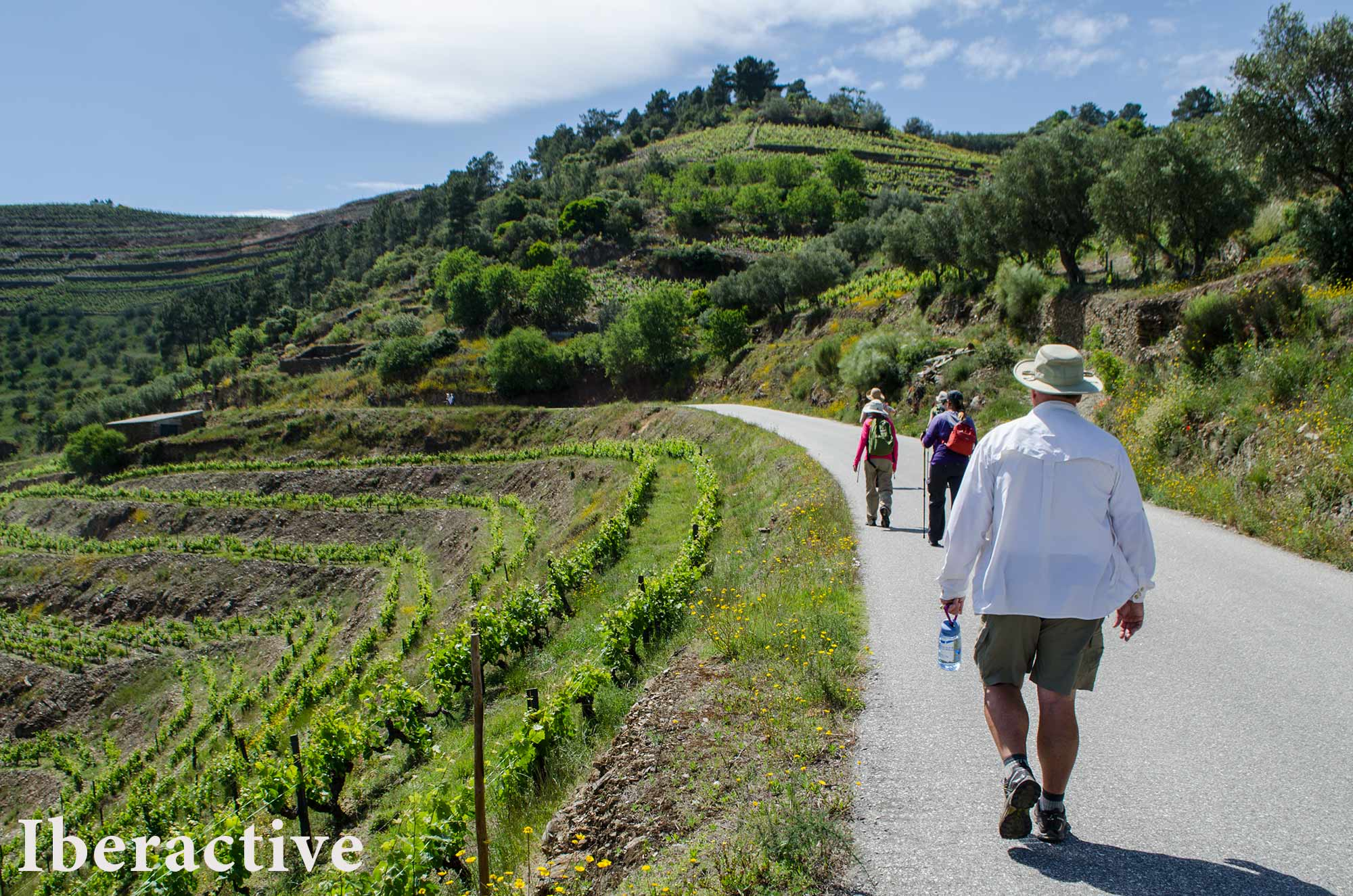 Walking the Douro Valley