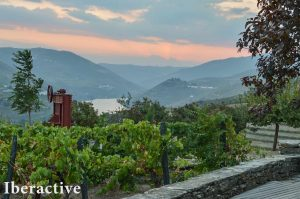 Douro Valley landscape with vineyards